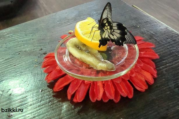 еда бабочек