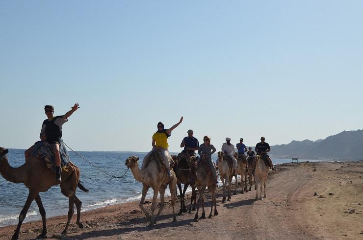 Катание на верблюдах. Абу-Галум. Египет